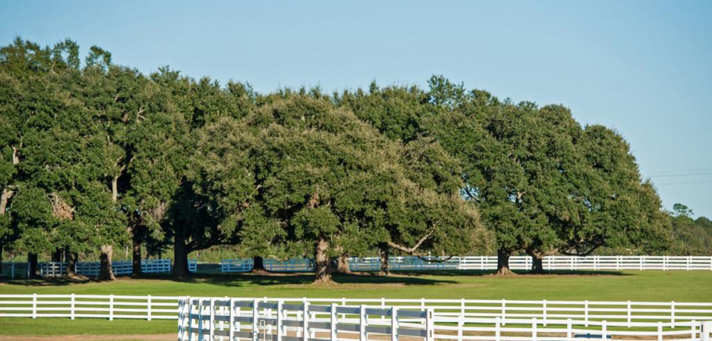 Dreamco-pastures-slider