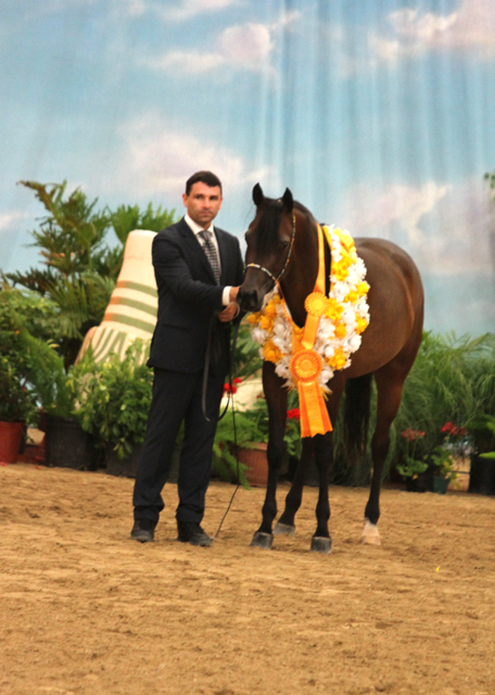 Frank Sponle and Amirah Gemaal DB (Bellagio RCA) Bronze Champion Mare two